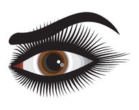 Beautiful woman eye. Vector illustrations of the Beautiful woman eye Stock Images