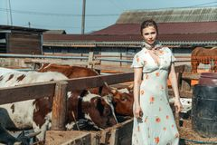 A beautiful woman on a farm feeds the cattle with hay stock image