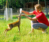 Beautiful woman feeds young deer Stock Photos