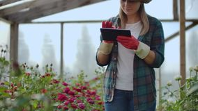 Beautiful woman florist walks through the greenhouse with a tablet computer checks the grown roses, keeps track of the. Harvest and check flower for business stock footage