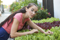 Beautiful Woman At Garden Shop. Attractive young woman tending display of potted plants at gardening store on sunny day Royalty Free Stock Photography