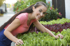 Beautiful Woman At Garden Shop. Attractive young woman enjoying her work tending display of potted plants at gardening store on sunny day Stock Photography