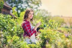 Beautiful woman gardening Royalty Free Stock Photography