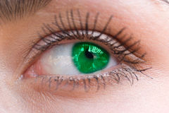 Beautiful woman green eye Stock Images
