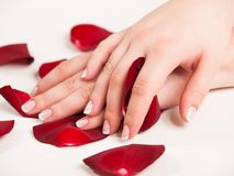 Beautiful woman hand with polished nails in french style holding rose petals stock photos