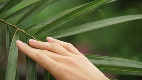 Beautiful woman hand stroking palm leaf. Hand with manicure. Selective focus. Close up view stock footage