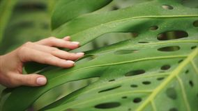 Beautiful woman hand stroking palm leaf. stock video