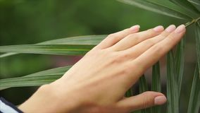 Beautiful woman hand stroking palm leaf. stock footage