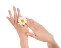 Beautiful woman hands french manicure with camomile daisy flower Stock Images
