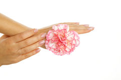Beautiful woman hands with pink gillyflower Stock Images