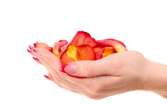 Beautiful woman hands with rose petals Stock Photography