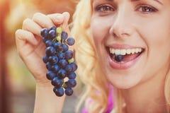 Beautiful woman harvesting grapes Stock Image