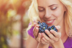 Beautiful woman harvesting grapes. Beautiful young  blond woman harvesting blue grapes Stock Photos