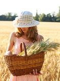 Beautiful woman in the hat with basket full of ripe ears Royalty Free Stock Image