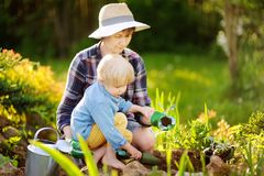 Beautiful woman and her cute son planting seedlings in bed in the domestic garden at summer day. Beautiful women and her cute son planting seedlings in bed in stock photography