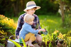 Beautiful woman and her cute son planting seedlings in bed in the domestic garden at summer day. Beautiful women and her cute son planting seedlings in bed in royalty free stock images