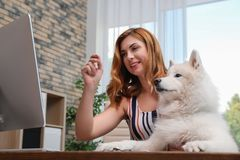 Beautiful woman with her dog sitting at table. In home office royalty free stock photography
