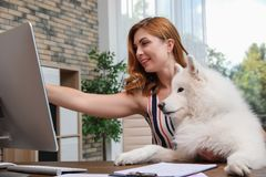 Beautiful woman with her dog sitting at table. In home office royalty free stock image