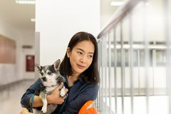 Beautiful woman holding Chihuahua dog at vet hospital. Beautiful woman holding Chihuahua dog at vet hospital royalty free stock photos
