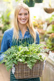 Beautiful woman holding plant in wicker basket. Portrait of beautiful woman holding plant in wicker basket at greenhouse stock photo