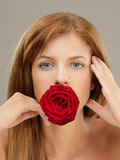 Beautiful woman holding red rose in mouth. Beauty closeup portrait of young, blonde woman, holding a red rose between her teeth Royalty Free Stock Images