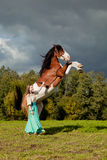 Beautiful woman with a horse in the field. Girl on Royalty Free Stock Photography
