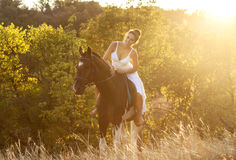 Beautiful woman on a horse. Horseback rider Stock Image