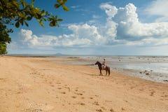 Beautiful woman on a horse. Horseback rider. Paradise tropical beach. Paradise tropical beach. Beautiful woman on a horse. Horseback rider Royalty Free Stock Image