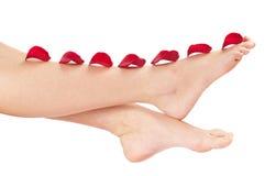 Beautiful woman legs with rose Stock Photos