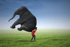 Beautiful woman lifting heavy elephant. On the green field Royalty Free Stock Photo