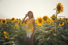Beautiful woman with long hair in a field of sunflowers in the s stock images