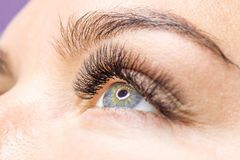 Beautiful Woman with long lashes in a beauty salon. Eyelash extension. stock images