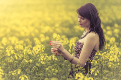Beautiful woman in meadow of yellow flowers holding flower. Attractive genuine young girl enjoying the warm summer sun in a wide green and yellow meadow. Part of Royalty Free Stock Photos