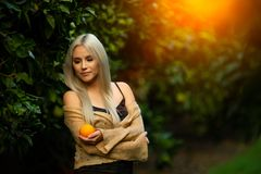Beautiful woman with orange in orchard. Pretty young woman, outdoors at sunset in a orange orchard, smiling, holding an orange fruit. Healthy lifestyle concept royalty free stock photography