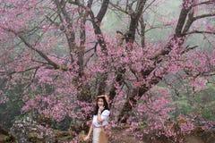Beautiful woman with Paphiopedilum flowers at Doi Inthanon,Pink sakura flower at Paphiopedilum royalty free stock photos