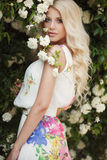 Beautiful woman in Park near the Bush blooming roses royalty free stock photo