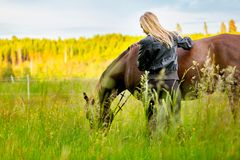 Beautiful woman patting her arabian horse standing in the field royalty free stock photo