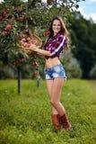 Beautiful woman picking apples Stock Photos