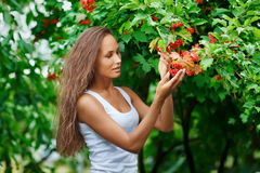 Beautiful woman picking guelder rose berries Royalty Free Stock Photo
