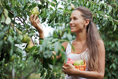 Beautiful woman picking the pear. In the garden stock images