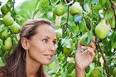 Beautiful woman picking the pear royalty free stock images