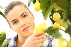 Beautiful woman picks a lemon Royalty Free Stock Image