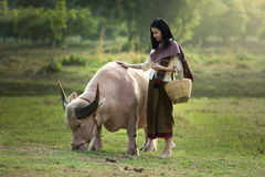 The beautiful woman and pink buffalo Stock Photos