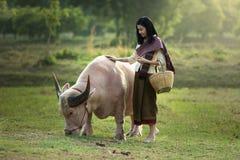 The beautiful woman and pink buffalo. Beautiful woman and albino dwarf buffalo Stock Photos