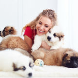 Beautiful woman playing with cute caucasian shepherd puppies. Beautiful young woman playing with cute caucasian shepherd puppies royalty free stock photo