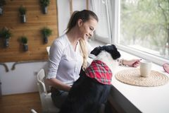 Beautiful woman playing at home with her happy dog. Beautiful woman playing at home with happy dog Royalty Free Stock Images