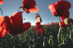 Beautiful woman in a poppy field Stock Photo