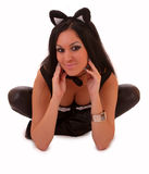 Beautiful woman posing in cat costume isolated Stock Photos