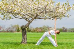 Beautiful woman is practicing yoga, doing Utthita Trikonasana exercise, extended triangle pose near tree stock photography