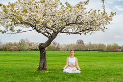 Beautiful woman is practicing yoga sitting in Lotus pose near blossom tree royalty free stock image